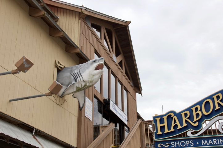 Shark leaving restaurant laurie best photo