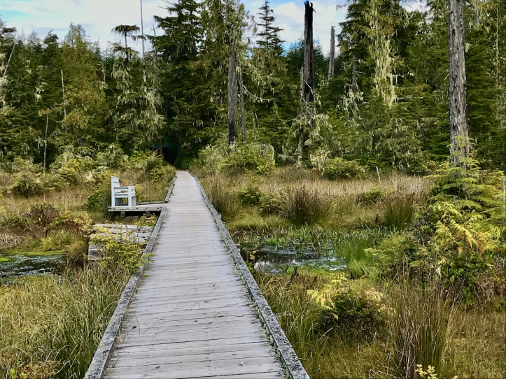 wooden walkway through ecological reserve laurie best photo