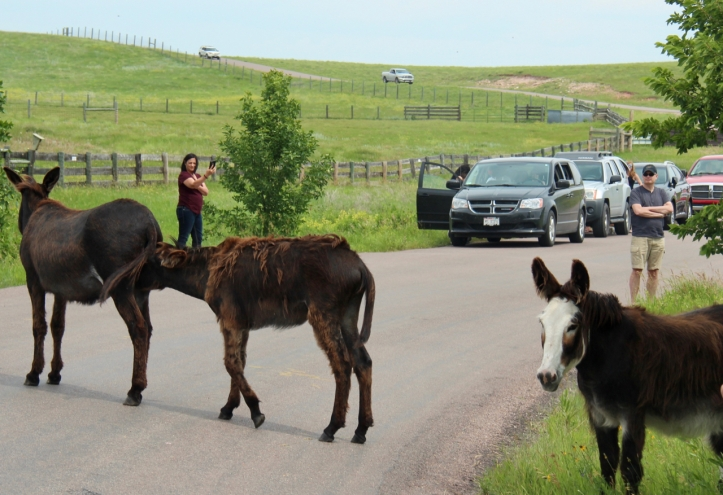 three mules on the road laurie best photo
